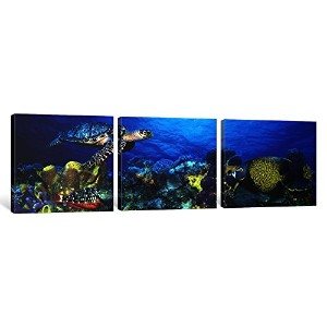 iCanvasART 3PieceタイマイEretmochelys imbricata and French angelfish Pomacanthus Paru withストップライトParrot...