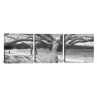 iCanvasART tby143ピースナットツリーキャンバスプリントby Thomas Barbey、48by 16インチ、0.75-inch Deep