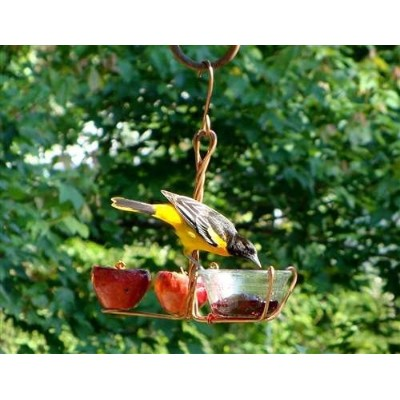Songbird Essentials SEHHFRJL Fruit and Jelly Feeder