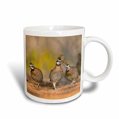 (330ml Magic Transforming Mug) - 3dRose mug_147092_3 Northern Bobwhite Quail Covey Bird, South...
