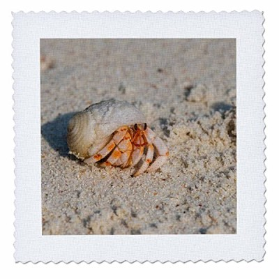 3drose Danita Delimont – Marine Life – モルディブ、Baa Atoll、olhugiri。Hermit crabs on the beach – キルト正方形...