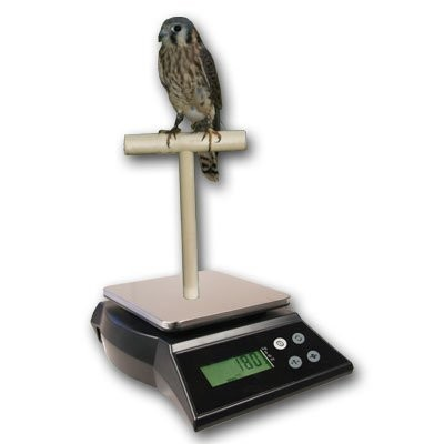 ZIEIS Digital Bird Scale | A42SS-NMTP | Wooden T Perch | Suction Cup | 1.0 Gram or 0.05 Ounce...