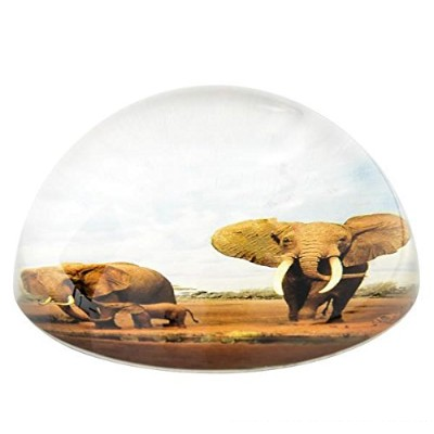 80 mmドームPaperweight elephant family, Case of 36