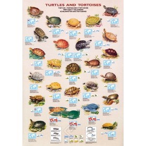 ポスター Turtles and Tortoises