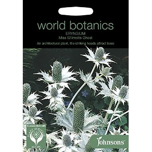WB 英国ジョンソンズシード Johnsons Seeds world botanics collection Eryngium Miss Willmotts Ghost ワールド・ボタニクス...