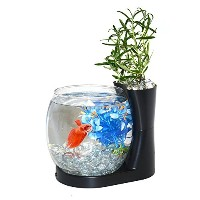 Elive Betta Bowl & Planter Black [並行輸入品]