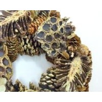 金色のハスの実リース Lotus pinecone Wreath M gold