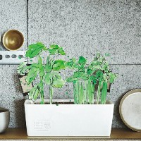 """URBAN GREEN MAKERS ベジタブルキット05""""JAPANESE""""【アーバングリーンメーカーズ】【DIYキット】【栽培キット】【ガーデニング】【ugm】"""