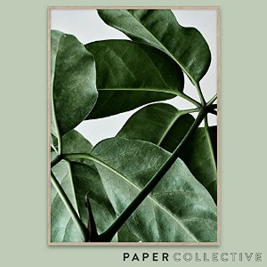 【PAPER COLLECTIVE】GREEN HOME 01/グリーンホーム01 50x70cm