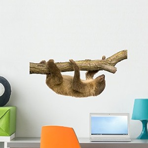 Wallmonkeys WM268614 Baby Two-toed Sloth (4 Months) - Choloepus Didactylus Peel and Stick Wall...