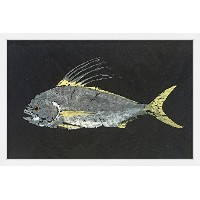 Marmont Hill mh-watsel-05-nwfp-18Roosterfish by Warren Sellers Framedペイント印刷 36x24 MH-WATSEL-05...
