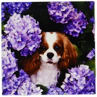 CT _ 61913フローレン犬 – Cavalier King Charles Spaniel – タイル 6-Inch ct_61913_1