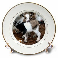 CP _ 1285ファーム動物 – Pygmy Goat Family – プレート 8 inch Porcelain Plate cp_1285_1