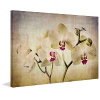"""Marmont Hill Pale Orchids Wide by Malek絵画印刷Wrappedキャンバス 16"""" x 24"""" グリーン ET-MWW-HM-341-C-24"""