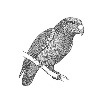 Parrot、pre-inked動物ゴム製スタンプ( # 440112) Stamp size (30x30mm) グリーン