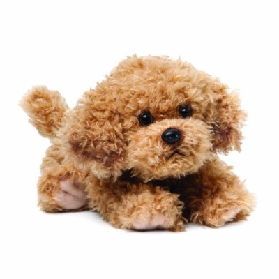 Nat and Jules Plush Toy, Labradoodle, Large by Nat and Jules [並行輸入品]