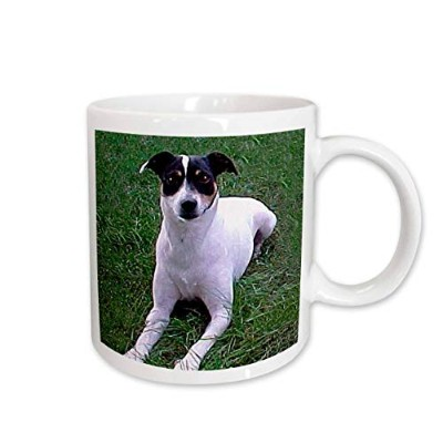 (440ml) - 3dRose Rat Terrier Mug, 440ml