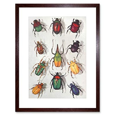 Scientific Beetles Insect Colourful Framed Wall Art Print カラフル壁