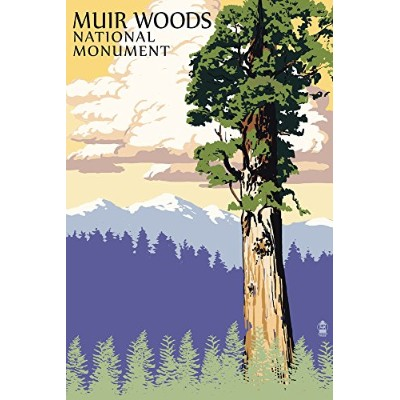 Muir Woods National Monument、カリフォルニア – Towering Redwood 9 x 12 Art Print LANT-51720-9x12