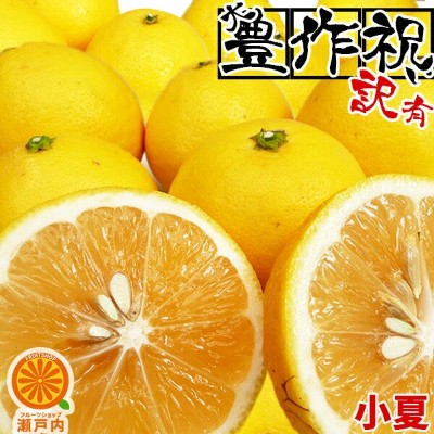 【買い回りに♪】愛媛産 小夏 1kg 訳あり【2品で+1kg(3kgセット) 3品で+2kg(5kgセット)】【送料無料(一部地域除く)】愛媛県産 こなつ ニューサマーオレンジ 日向夏 土佐小夏...