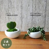 GREENPARKグリーンパーク|セダム2点セット/白陶器S モス