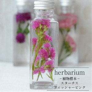 【herbarium Bottle】ハーバリウム角ミニボトル スターチス フィッシャーピンク -植物標本-母の日ギフト