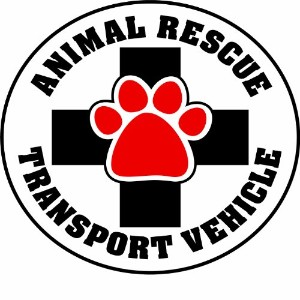Imagine This 4-3/4-Inch by 4-3/4-Inch Car Magnet Social Issues Circle, Animal Rescue Transport...