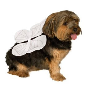 Rubies Costume Company Pet Angel Wings, Medium/Large by Rubie's Costume Co