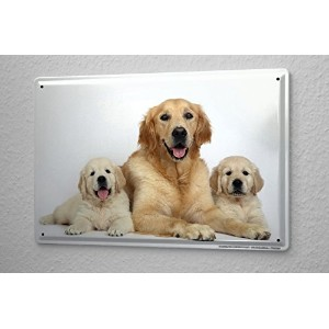 Tin Sign ブリキ看板 Breed Golden Retriever bitch puppy