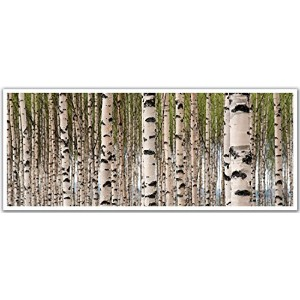 JP London PAN5315 uStrip Birch Tree Forest Colorful High Resolution Peel Stick Removable Wallpaper Sticker Mural, 48' Wide by 19.75' High [並行輸入品]