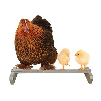 Precision Pet Portable Roosting Bar by Precision Pet