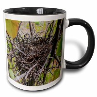 3drose Rebecca Anne Grant Photography Nature Birds Nest – 空Bird Nest – マグカップ 11 oz ホワイト mug_36698_4