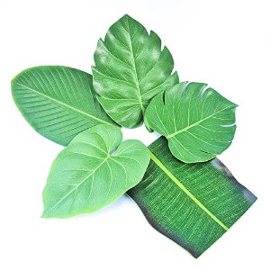 5pcs Coasters Leaf Shape Green Drink Coasters Set of 5 Leaves コースター 葉 シェイプ グリーン ドリンク