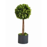 Zodax ch-2559ボールBoxwood Topiary in Glazed Pot
