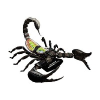 Famemaster 4D-Vision 4D-Vision Scorpion Anatomy M by Famemaster 4D-Vision