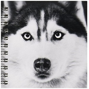 "VWPics犬N猫 – Siberian Husky – Drawing Book 4 by 4"" db_11326_3"