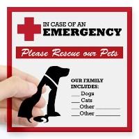 "CafePress – In Case Of Emergency :ペットレスキューステッカーSquare St – Squareバンパーステッカー車デカール、3 "" x3 "" ( Small ..."