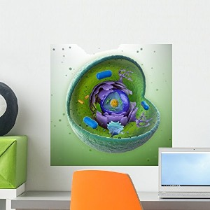 Wallmonkeys WM356895 Animal Cell Cut-away Peel and Stick Wall Decals (18 in H x 18 in W) by...
