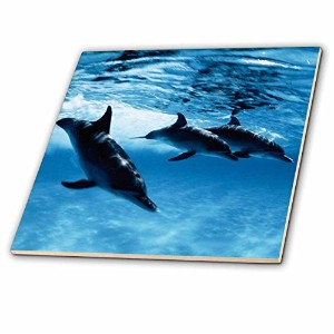 【Danita Delimont Dolphins Trio of Dolphins タイル 4 ct_206330_1】 b00usulfym