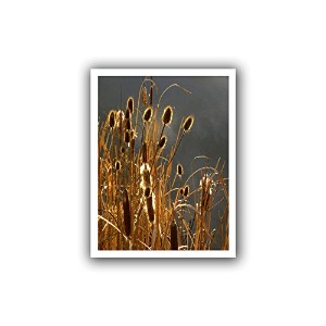 ArtWall ' Cattails and Stormライト'フラットUnwrappedキャンバスアートby Dean Uhlinger 24x32 0uhl400a2432r