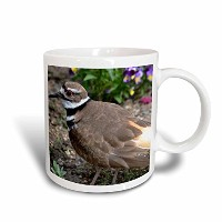 3drose PS写真 – Pretty Killdeer鳥 – 動物 – Nature Photography – マグカップ 11 oz ブルー mug_63402_6