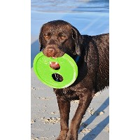 High Quality Flying Object Dog Throwing Disc Toy, Large, Colors...