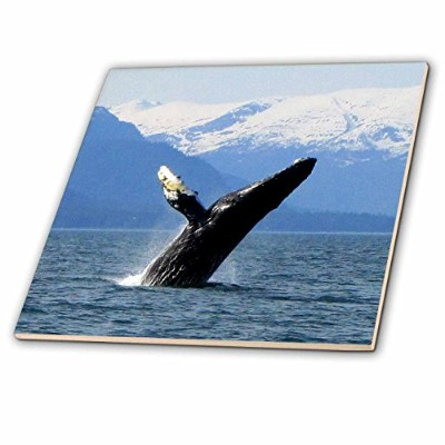 Krista Funk Creations Humpback Whales–Humpback Whale Tosses and Turns in the Lynn Canal Southeaste...