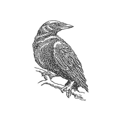 Crow、pre-inked動物ゴム製スタンプ( # 440120) Stamp size (30x30mm) グリーン