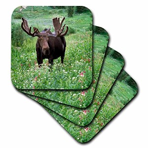 3drose CST _ 94756_ 3Bull Moose Wildlife Little Cottonwood、wasatch-cache-us45hga0064-howie...
