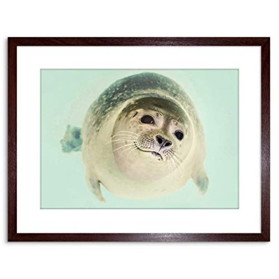 Animal Seal Swim Close Up Face Framed Wall Art Print