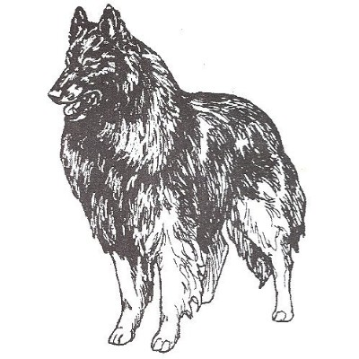 Dog Rubber Stamps -Belgian Tervuren-1E Size: 5.1cm Wide X 5.1cm - 1.3cm Tall