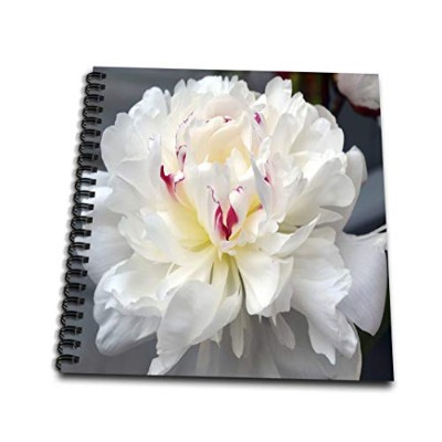Whiteoak Photography Floral Prints–A Perfect Peonyホワイトピオニー花–Drawing Book 8 by 8-Inch db_22388_1