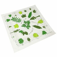 #138010ザ・プリンテッドイメージ(THE PRINTED IMAGE)バンダナ(55×55cm) - NATURE FACTS BANDANA TREES OF NORTH AMERICA...