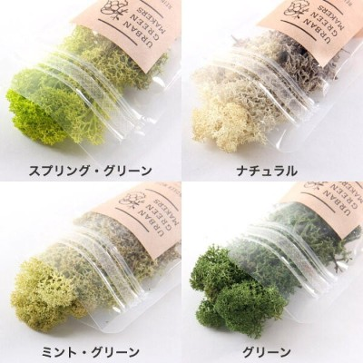 レインディアモス URBAN GREEN MAKERS REINDEER MOSS